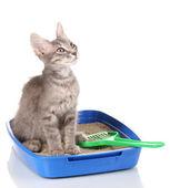 Small gray kitten in blue plastic litter cat isolated on white — Stock Photo
