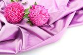 美丽翠菊鲜花的丝绸背景 — 图库照片
