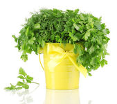 Yellow bucket with parsley and dill isolated on white — Стоковое фото
