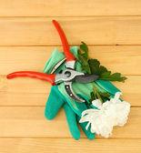 Cesoie con fiore isolato su bianco — Foto Stock