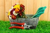 Cesoie con fiori in cesto su sfondo di recinzione — Foto Stock