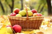 Bahçe sonbahar yaprakları üzerinde olgunlaşmış taze elma sepeti — Stok fotoğraf