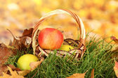Apples in wicker basket on grass on bright background — Stock Photo