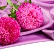 Stock Photo: Beautiful aster flowers, on silk background