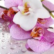 Pink and white beautiful orchids with drops — Stock Photo #15634771
