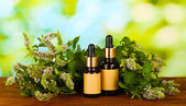 Essential oil and mint on green background close-up — Стоковое фото