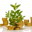 Stock Photo: Golden coins and plant isolated on white