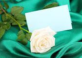 Beautiful rose on green cloth — Stock Photo