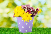Colorful chrysanthemums in violet bucket with white polka dot on green background — Stock Photo