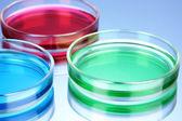 Kolor płynu w Petriego na niebieskim tle — Zdjęcie stockowe