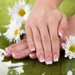 Woman hands with french manicure and flowers on green background — Stock Photo #15672921