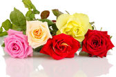 Beautiful colorful roses isolated on white — Stock Photo