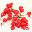Ripe viburnum in the snow close-up - Stock Photo