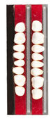 Teeth set isolated on white — Stock Photo