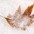 Stock Photo: Fallen leaf on snow