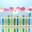Flowers in test tubes isolated on blue background — Stok fotoğraf
