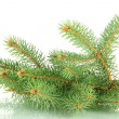 Fir tree branch, isolated on white - Stockfoto