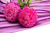 Beautiful aster flowers, on silk background — Stock Photo