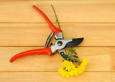 Secateurs with flower on wooden background — Stock Photo