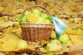 Cesta de manzanas frescas maduras en jardín en hojas de otoño — Foto de Stock