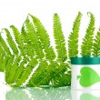 Jar of cream with branch of fern isolated on white — Stock Photo #15831107