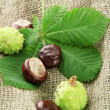 Chestnuts with leaves on burlap background — Stock Photo