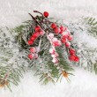 Rowan berries with spruce covered with snow — Photo