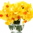 Beautiful yellow daffodils in transparent vase isolated on white — Stock Photo #15841639