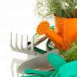 Stock Photo: Garden tools on white background close-up