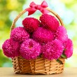Pink aster flowers in basket on green background — Stock Photo #15842605