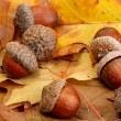 Brown acorns on autumn leaves, close up — Stock Photo #15843427