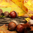 Brown acorns on autumn leaves, close up — Stock Photo #15843443