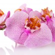 Stock Photo: Beautiful pink orchid, isolated on white
