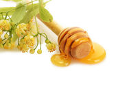Drizzler with sweet honey and linden flowers isolated on white — Stock Photo