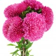 Pink aster flowers, isolated on white - Stock Photo