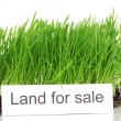 Green grass with ground as concept of land sale isolated on white - Foto de Stock