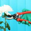 Secateurs with flower on fence background - Стоковая фотография