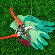 Secateurs with flower on green grass background - Стоковая фотография