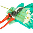 Secateurs with flower isolated on white - Стоковая фотография