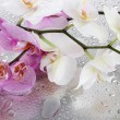 Pink and white beautiful orchids with drops — Stock Photo #15987127