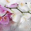 Stock Photo: Pink and white beautiful orchids with drops