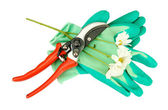 Secateurs with flower isolated on white — Stock Photo