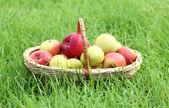 Cesto di mele mature fresche nel giardino sull'erba verde — Foto Stock