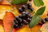 яркие осенние листья и лесные ягоды, крупным планом — Стоковое фото