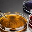 Color liquid in petri dishes on grey background — Stock Photo