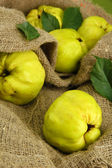 Sweet quinces with leaves, on burlap background — Stock Photo
