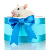 Funny little rat in gift box, isolated on white — Stock Photo