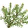 Stock Photo: Fir tree branch, isolated on white