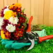 Secateurs with flowers on grass on fence background — Stock Photo