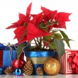 Royalty-Free Stock Photo: Beautiful poinsettia with christmas balls and presents isolated on white